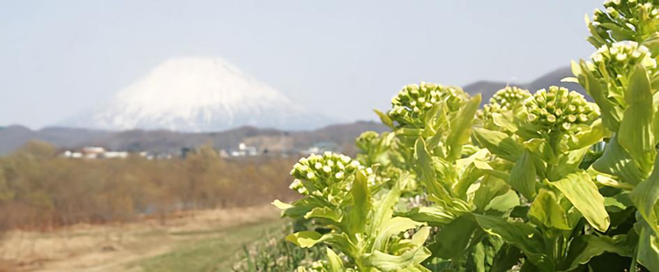 ニセコ風景画像7